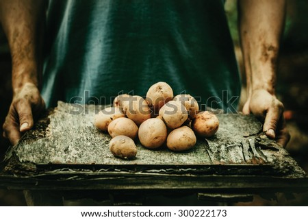 Organic vegetables. Farmers hands with freshly harvested vegetables. Fresh bio potatoes - stock photo