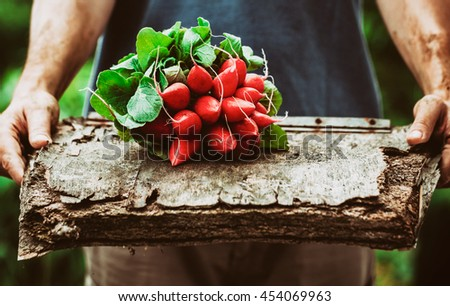 Organic vegetables. Farmers hands with freshly harvested vegetables. Horse radish - stock photo