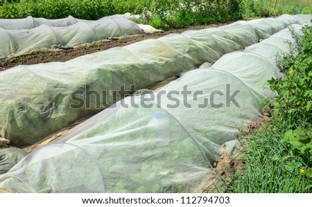 Organic vegetables growing under protective netting - stock photo