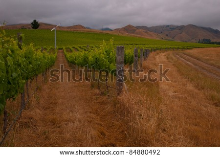 Organic vineyard with wind turbine in the field - stock photo