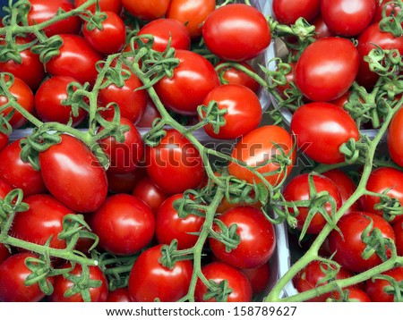 Organically grown red tomatoes on the vine background - stock photo