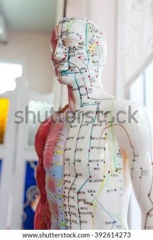 Oriental Medicine model no.8 - stock photo