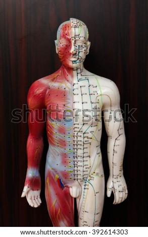 Oriental Medicine model no.1 - stock photo