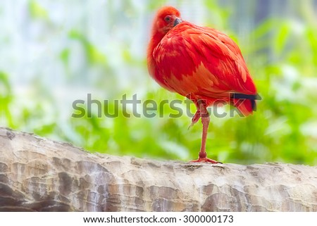 Oriental Red stork in their natural habitat. - stock photo