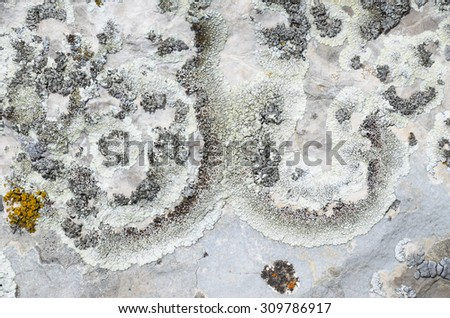 Original colony of lichen in the form of open circles on the limestone. Natural texture: lichen on stone - stock photo