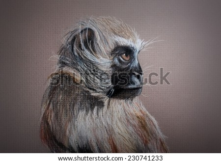 Original Hand Drawn Charcoal and Pastel Monkey Sketch Drawing - stock photo