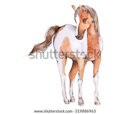 Original Watercolor Illustration of a Brown & White Horse or Pony - stock photo