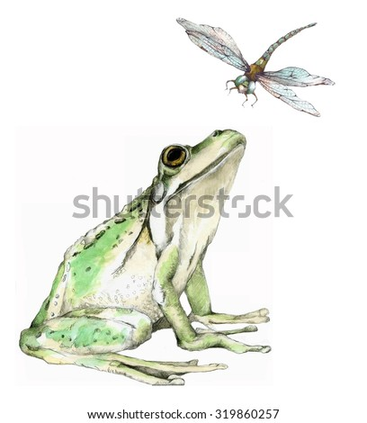 Original Watercolor Illustration of a Frog and Dragonfly - stock photo