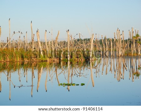 Orlando Wetlands Park Panorama Reflection Travel Swamp - stock photo