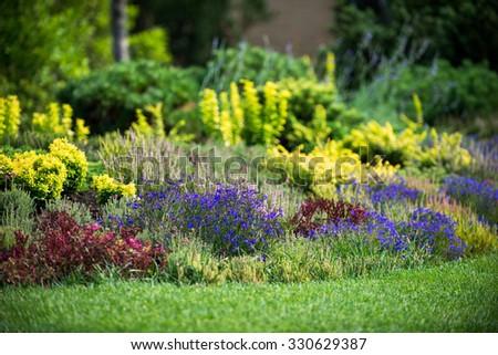 Ornamental flowering garden, flower carpet - stock photo