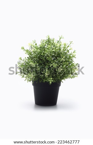 Ornamental plants - stock photo