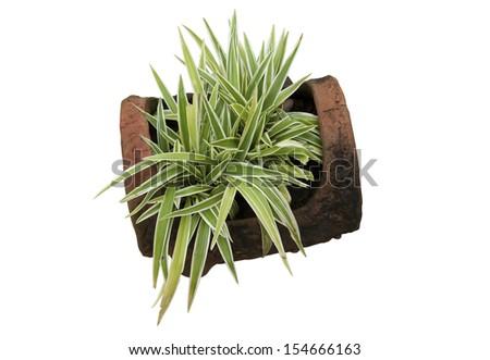Ornamental plants on white background - stock photo