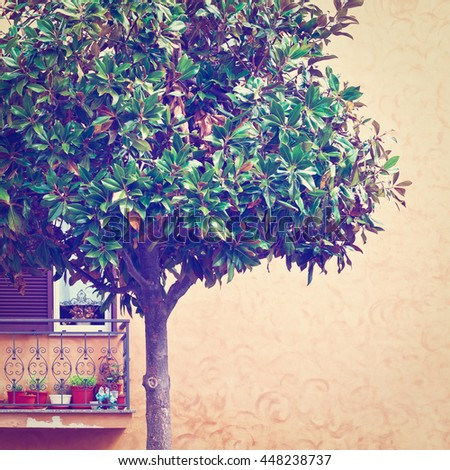 Ornamental Tree on the Background of the Facade of Italian House with Balcony, Retro Effect - stock photo