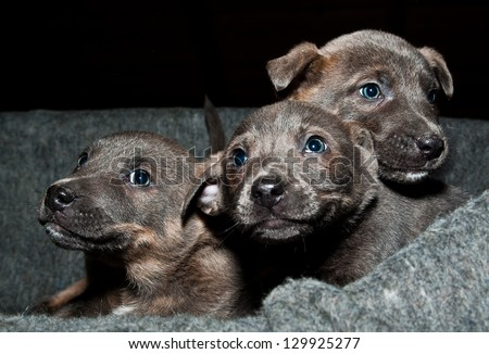 Orphan puppies - stock photo