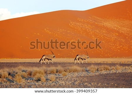 oryx near amazing dunes in the namib naukluft national park namibia - stock photo