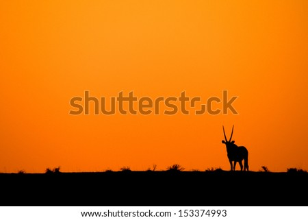 Oryx sunset - stock photo