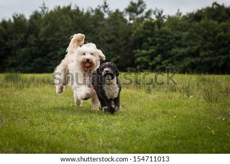 Oscar and Cassie - stock photo