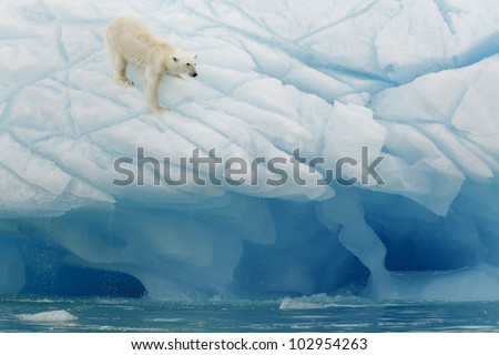 Oso polar en las islas Svalbards, Noruega - stock photo