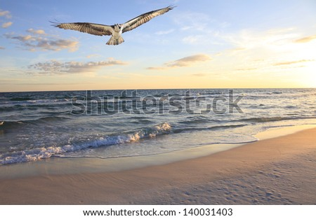 Osprey Flying in from the Gulf at Sunrise After an Unsuccessful Fishing Trip - stock photo