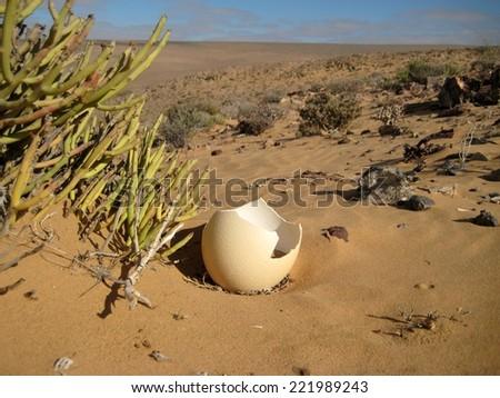 Ostrich egg shell in desert - stock photo
