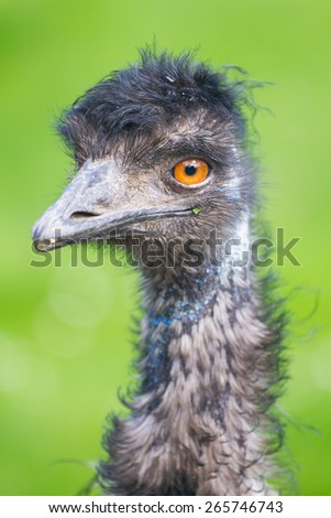 Ostrich portrait - stock photo