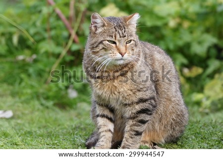 Outdoor cat on the grass in home garden  - stock photo