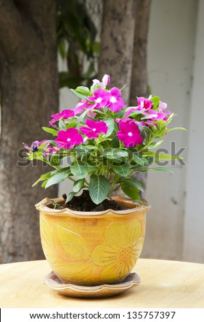 Outdoor flower pot for small garden - stock photo
