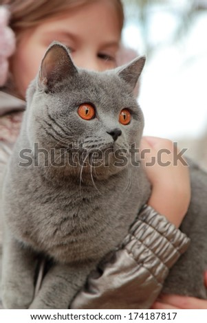 Outdoor image of beautiful lovely girl  holding british cat at autumn park/Pretty little girl and british catwalking at the autumn park - stock photo