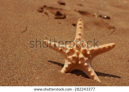 Outdoor image of starfish on sand background over Black Sea, East Crimea, Russia  - stock photo