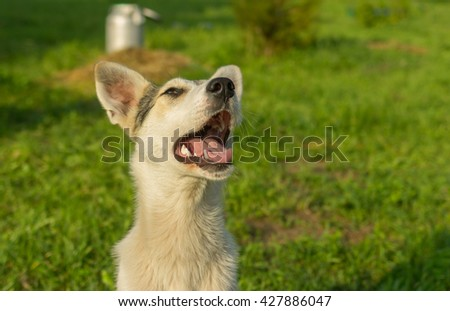 Outdoor portrait of adorable mixed breed young dog looking up - stock photo