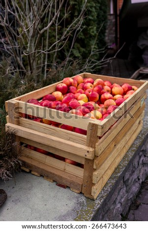 Outdoor shot of wooden box full of fresh red apples - stock photo