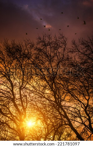 Outdoors autumn scene with trees and branches at sunset - stock photo