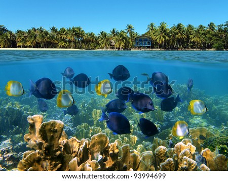 Over under landscape with a school of tropical fish in a coral reef and beach with coconut trees and house at the horizon - stock photo