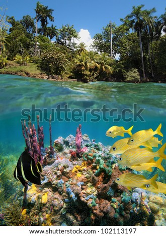 Over-under split view with colorful underwater marine life in a coral reef near tropical coast - stock photo