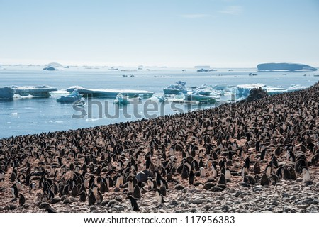 Overcrowded island, lots of gentoo penguins. Antarctica - stock photo