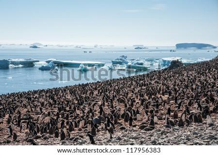 Overcrowded island, lots of gentoo penguins. Antarctica - stock photo