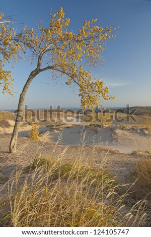 Overhanging tree on sand dunes at sunrise - stock photo