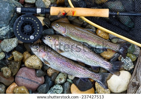 Overhead view of three wild trout with fishing fly reel, landing net and assorted flies on wet river bed stones - stock photo