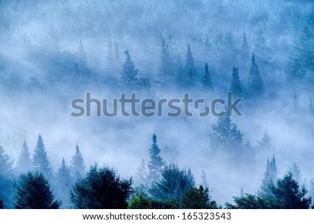 Overlooking a field of fog shrouded trees in the early morning light, Stowe, Vermont, USA - stock photo