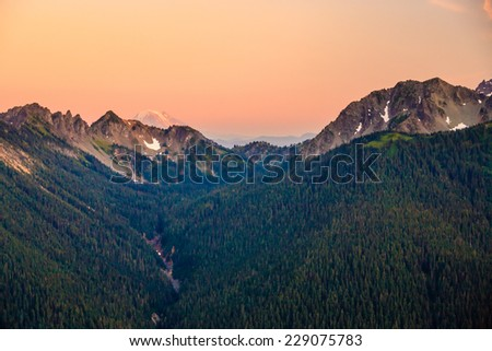 Overlooking a pine tree covered valley with Mt. Rainier in the background, Mt. Rainier National Park, Washington, USA. - stock photo