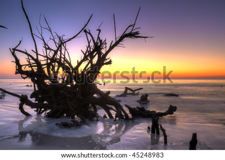 overturned tree in water at sunrise, hdr image - stock photo