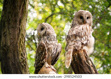 Owl. - stock photo