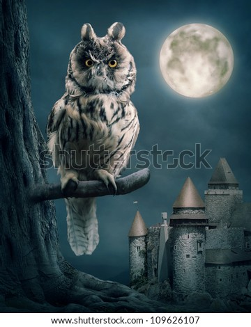 Owl bird sitting on branch at night - stock photo