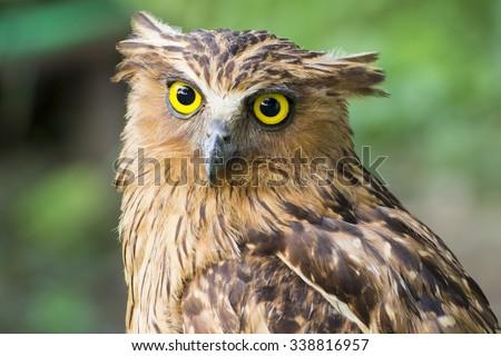 Owl face close up - stock photo