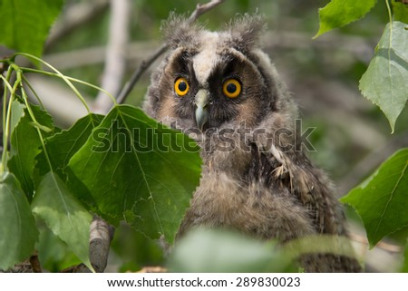 Owl in green leaves - stock photo