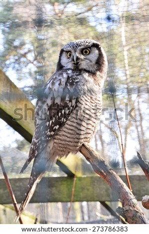 owl in the zoo behind bars.  (Focus on the bird.) - stock photo