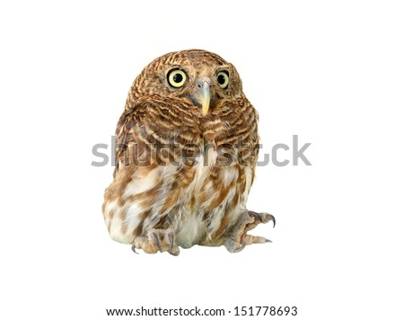 owl of white background - stock photo