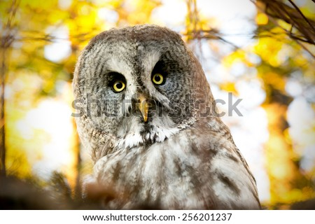 owl on a tree - stock photo