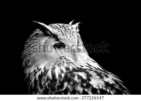 Owl on dark background. Black and white image - stock photo