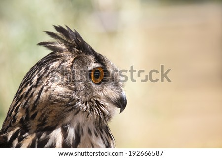Owl portrait with orange eyes in nature - stock photo